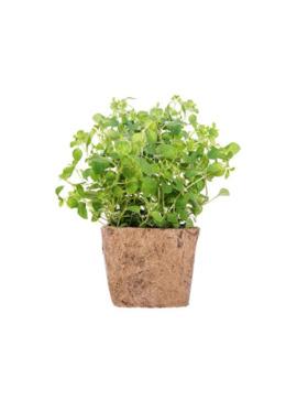 Qubo PH Majoram DIY Garden Kit