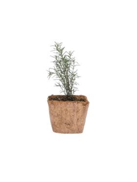 Qubo PH Rosemary DIY Garden Kit