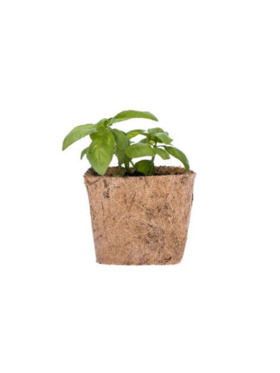 Qubo PH Genovese Basil DIY Garden Kit